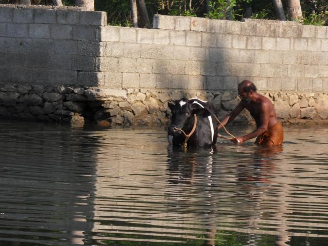 Badende in den Backwaters
