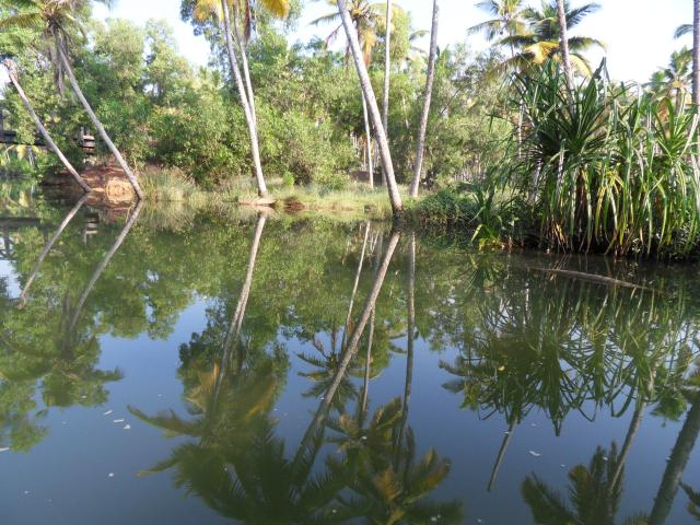 in den Backwaters