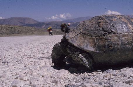 Eine Schildkröte kreuzte unseren Weg